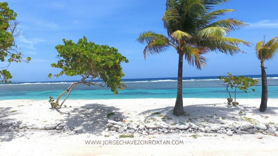 Winter Season in Roatan